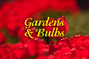 Gardens & Bulbs photo